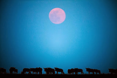 Full Moon in Africa