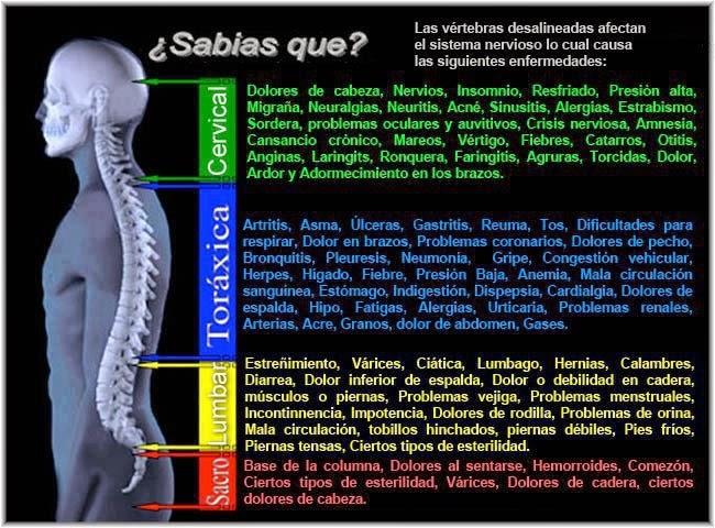 Cuidando la columna vertebral y la espalda. Tips para nuestra salud ...